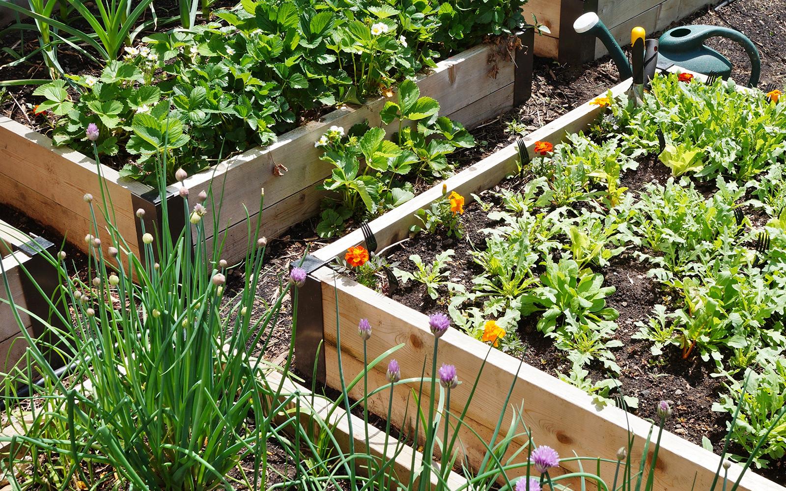 Gardening Blog Archives - Himmel's Landscape & Garden Center