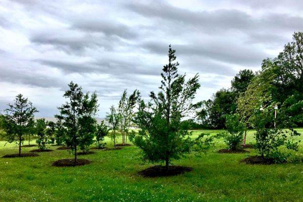 Himmel-Landscaping-18