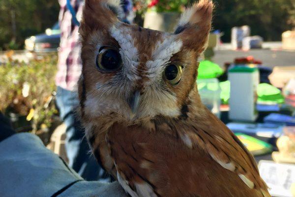Himmel-Owl-Day-11