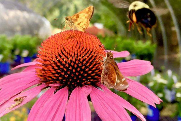 Himmel-Butterflies-110