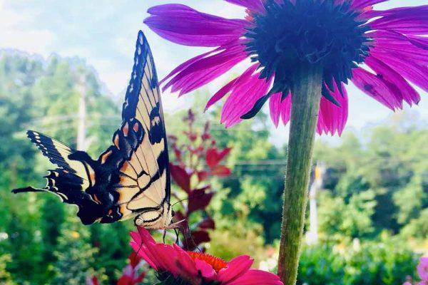 Himmel-Butterfly-111