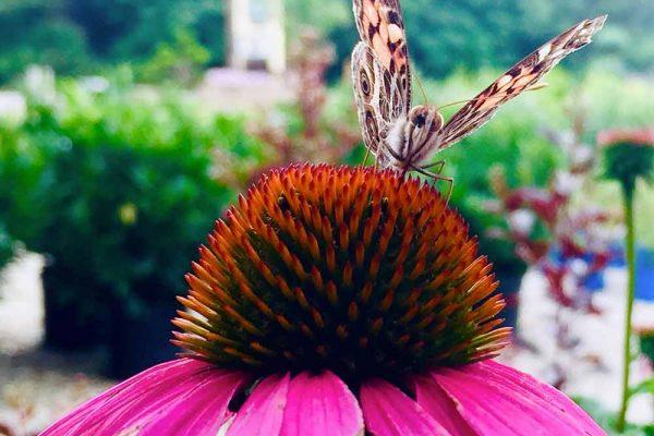 Himmel-Butterfly-123