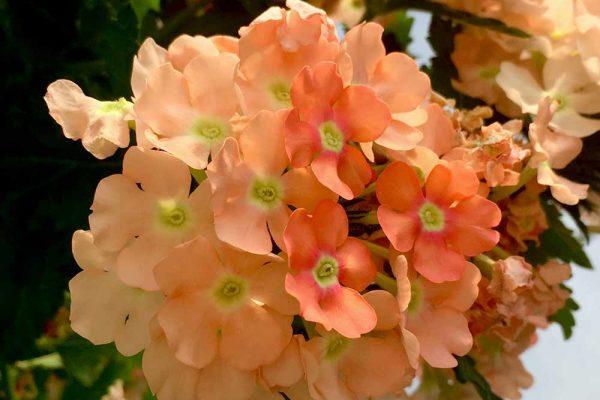 Himmel-Flowers-119