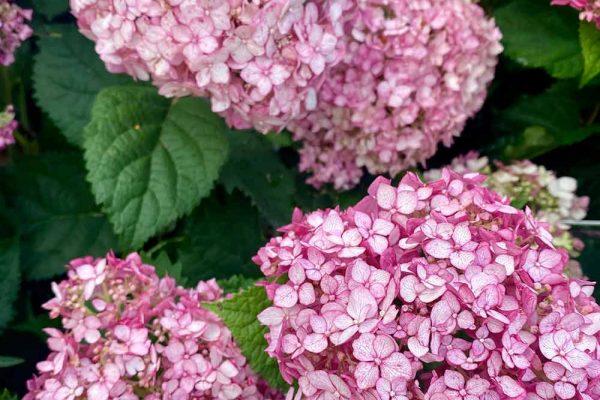 Himmel-Flowers-301