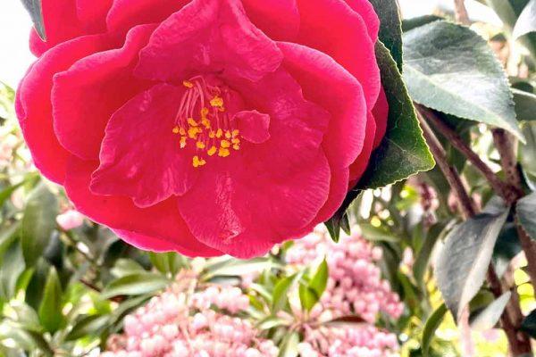 Himmel-Flowers-312