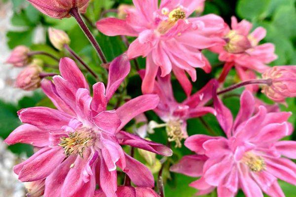 Himmel-Flowers-313