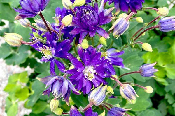 Himmel-Flowers-314