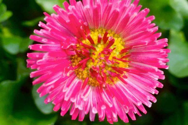 Himmel-Flowers-320