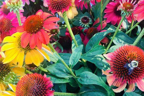 Himmel-Flowers-331