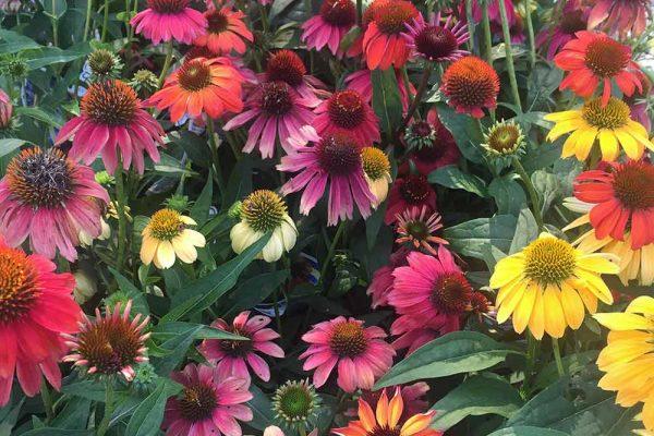 Himmel-Flowers-332
