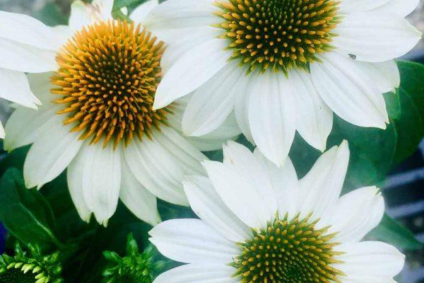 Himmel-Flowers-340