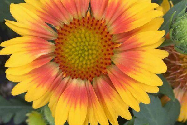 Himmel-Flowers-345