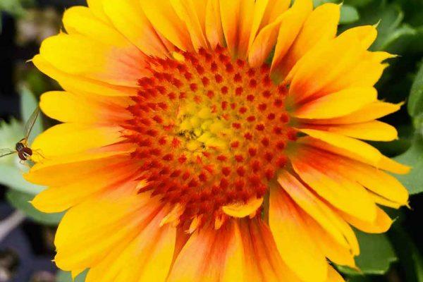 Himmel-Flowers-346