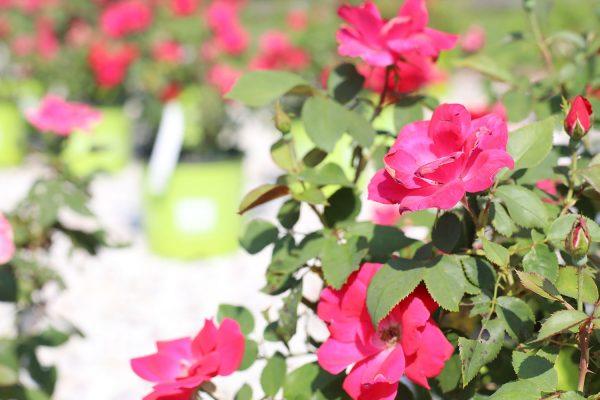 himmel_garden_center_24