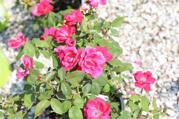 himmel_garden_center_26
