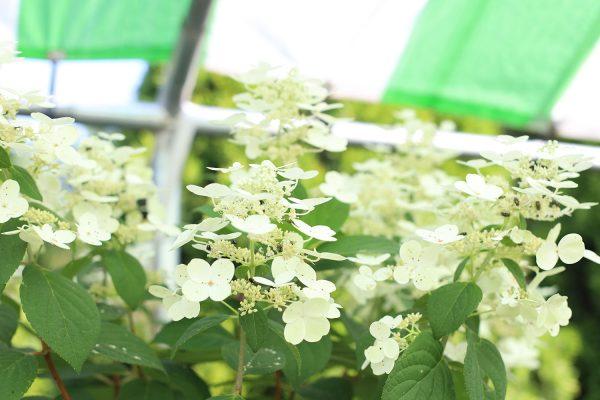 himmel_garden_center_73