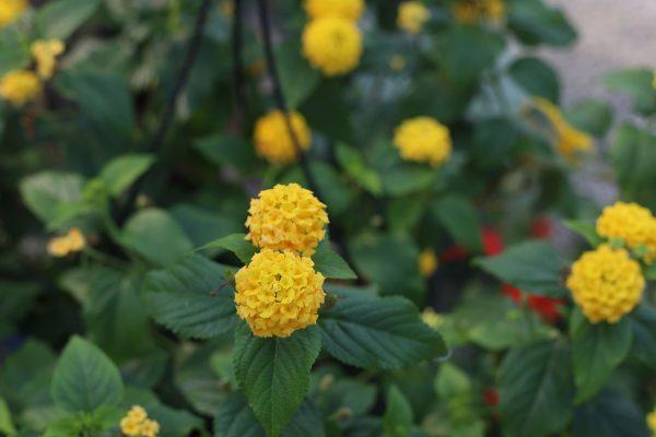 himmel_garden_center_75