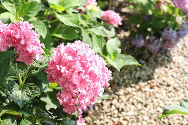 himmel_garden_center_97